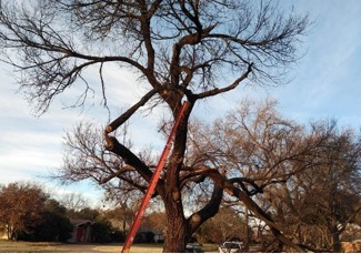 Cutting Edge provides tree trimming for your safety and for the appearance of your property.